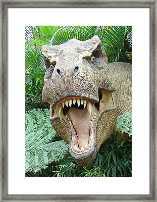 T-rex Framed Print by David Nicholls