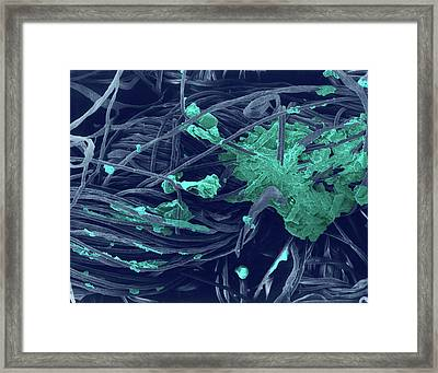 T-shirt Collar (cotton) With Dirt Framed Print by Dennis Kunkel Microscopy/science Photo Library
