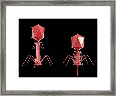 T4 Bacteriophage Framed Print