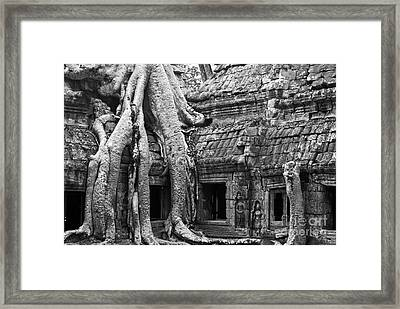 Ta Prohm Roots And Stone 01 Framed Print by Rick Piper Photography