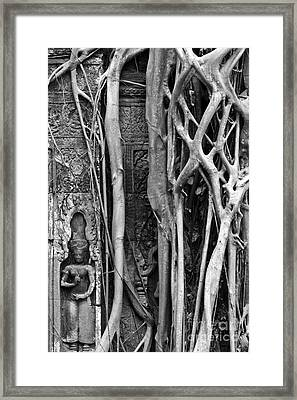 Ta Prohm Roots And Stone 09 Framed Print by Rick Piper Photography