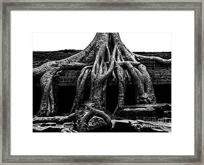 Ta Prohm Ruin Framed Print by Julian Cook