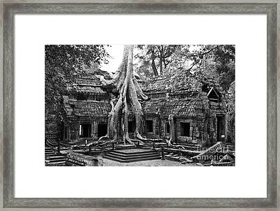 Ta Prohm Temple 01 Framed Print by Rick Piper Photography