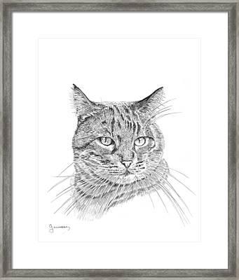 Tabby Framed Print by Carl Genovese