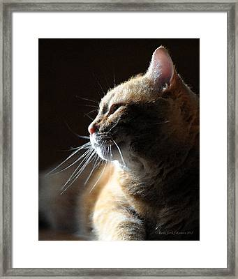 Tabby Cat Bathed In Light Framed Print by Renee Forth-Fukumoto