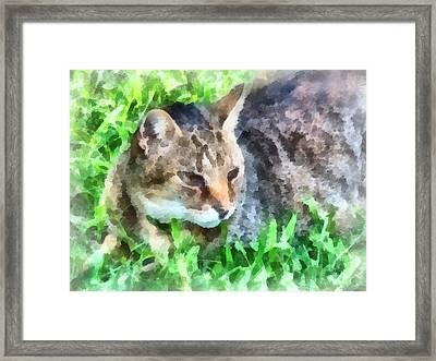 Tabby Cat Closeup Framed Print by Susan Savad