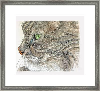 Tabby Cat Framed Print by Mary Mayes