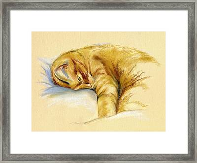 Tabby Cat Relaxed Pose Framed Print by MM Anderson