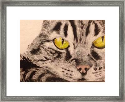 Tabby Close-up Framed Print by John Schuller