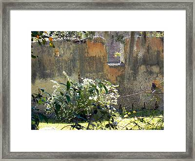 Tabby On The Old Point Framed Print by Patricia Greer