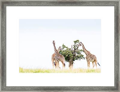 Table For Three - Color Framed Print by Mike Gaudaur