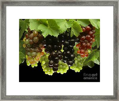 Table Grapes Framed Print by Craig Lovell