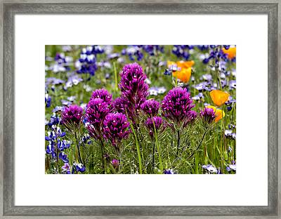 Table Mountain Beauties Framed Print