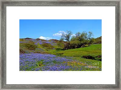 Table Mountain California Framed Print