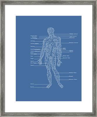 Table Of Arteries Framed Print