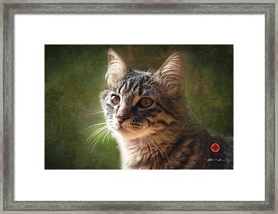Tabs Framed Print by David Davies