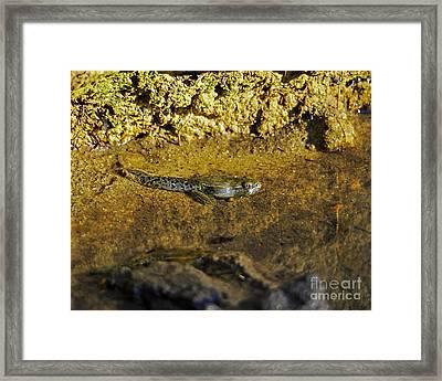 Tadpole Tail Framed Print by Al Powell Photography USA