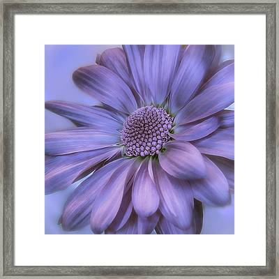 Taffeta And Pearls Framed Print