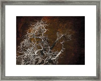 Tahoe 3 Framed Print by Jeff Burgess