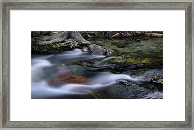 Tahoe Eagle River Framed Print by Dave Dilli