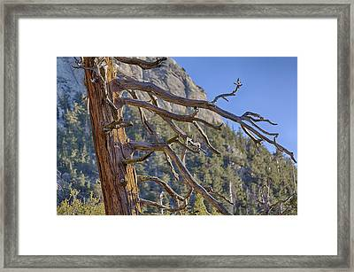 Tahquitz And The Pine Framed Print