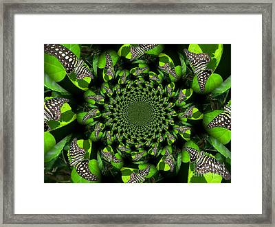Tailed Jay Morphed Framed Print by Deb Schense