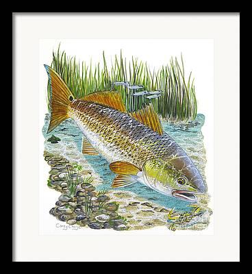 Blue Lake Crab Framed Prints