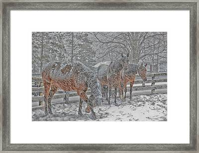 Framed Print featuring the photograph Tails To The Wind by Gary Hall