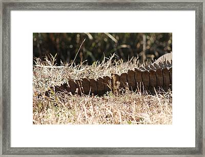 Tails You Lose Framed Print
