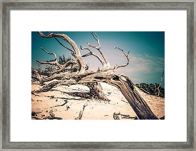 Tainted Wood Framed Print
