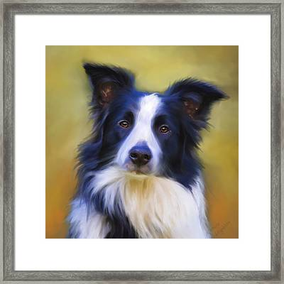 Beautiful Border Collie Portrait Framed Print