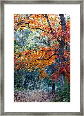 Take A Bough Framed Print by Debbie Karnes
