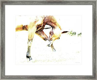 Framed Print featuring the photograph Take A Bow by Annie Zeno