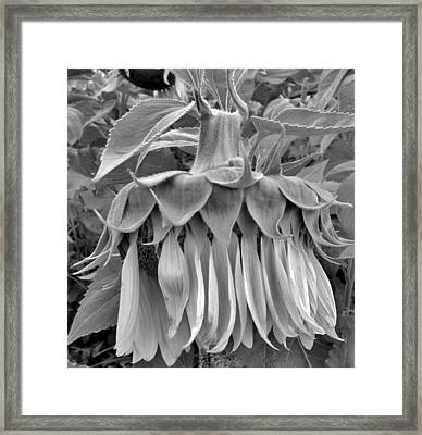 Take A Bow Framed Print