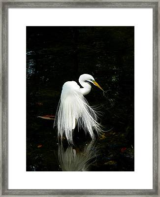 Take A Bow Framed Print by Susan Duda