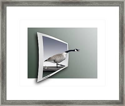 Take A Gander Framed Print by Brian Wallace
