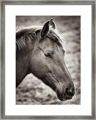 Framed Print featuring the photograph Take A Look by Maciej Markiewicz