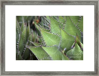 Take A Seat Framed Print by Amanda Barcon
