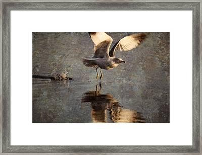 Take Flight Framed Print by Andrew Pacheco