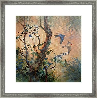 Take Flight - Barn Swallows Framed Print by Floy Zittin
