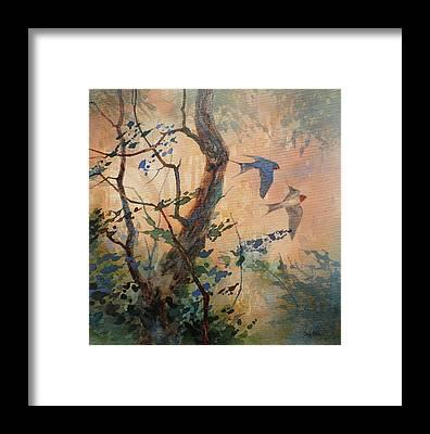 Barn Swallow Framed Prints
