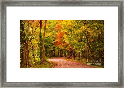 Take Me To The Forest Framed Print by Rima Biswas