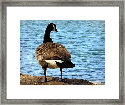 Take Me To The River Framed Print by Joseph Skompski