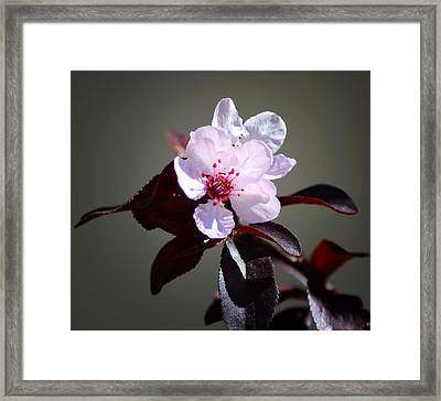 Take Notice Framed Print by Camille Lopez