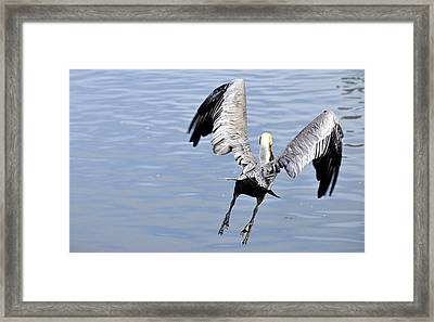 Framed Print featuring the photograph Take Off by AJ  Schibig