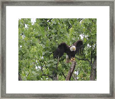 Take Off.  Framed Print