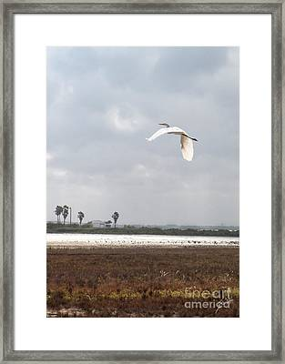 Framed Print featuring the photograph Take Off by Erika Weber