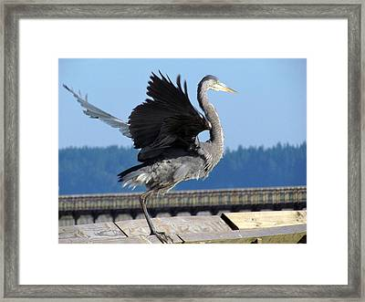 Framed Print featuring the photograph Take Off by I'ina Van Lawick