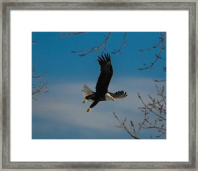 Take Off Framed Print by Joe Scott