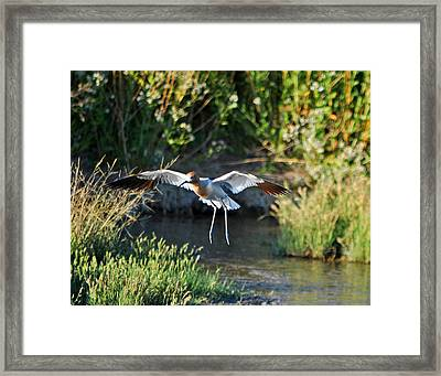 Framed Print featuring the photograph Take Off by Lula Adams
